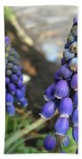 Blue Grape Hyacinths Beach Towel