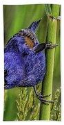 Blue Grosbeak On A Reed Beach Towel