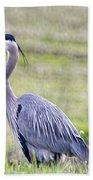 Blue Heron In Northern Wa  Beach Towel