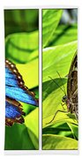 Blue Morpho Butterfly Diptych Beach Towel