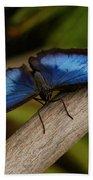 Blue Morpho Butterfly Beach Towel by Sandy Keeton