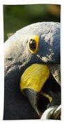 Blue Parrot Beach Towel