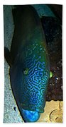 Blue Parrot Fish Beach Towel