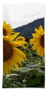 Blue Ridge Sunflowers  Beach Towel