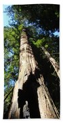 Blue Sky Big Redwood Trees Forest Art Prints Baslee Troutman Beach Towel