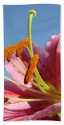 Blue Sky Florals Art Pink Calla Lily Blooming Baslee Troutman Beach Towel
