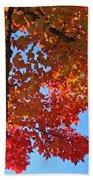 Blue Sky Red Autumn Leaves Sunlit Orange Baslee Troutman  Beach Towel
