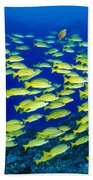 Blue Stripe Snapper Beach Towel