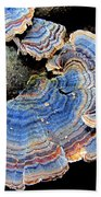 Blue Turkeytail Fungi Beach Towel