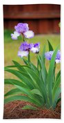 Blue Violet Irises  Beach Towel