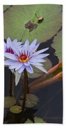 Blue Water Lilies Of Belize Beach Towel
