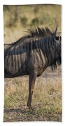 Blue Wildebeest Standing On Savannah Staring Ahead Beach Towel