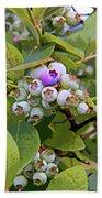 Blueberries On The Vine 7 Beach Towel