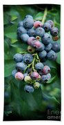 Blueberry Cluster Beach Towel