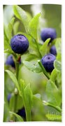 Blueberry Shrubs Beach Towel