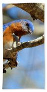 Bluebird Curiousity Beach Towel