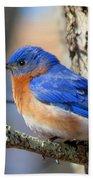 Bluebird Vibrance Beach Towel