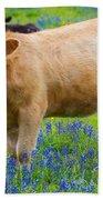 Bluebonnet Cow Beach Towel