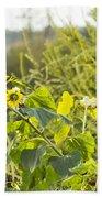 Bluejay And Sunflowers Beach Towel