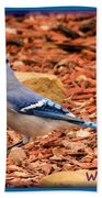 Bluejay Profile Beach Towel