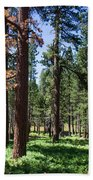 Bluff Lake Ca Fern Forest 3 Beach Towel