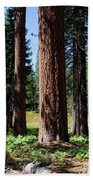 Bluff Lake Forest 3 Beach Towel