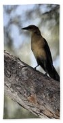 Boat - Tailed Grackle  Beach Towel