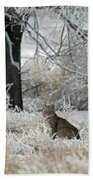 Bobcat And Heavy Frost Beach Towel
