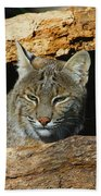 Bobcat Hiding In A Log Beach Towel