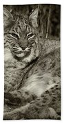 Bobcat In Black And White Beach Towel
