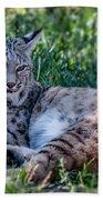 Bobcat In The Grass 2 Beach Towel