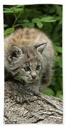 Bobcat Kitten Exploration Beach Towel by Sandra Bronstein