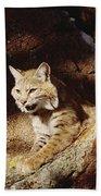 Bobcat Lynx Rufus Portrait On Rock Beach Towel