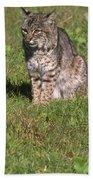 Bobcat - Wildcat Beach Beach Towel