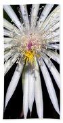 Bold Cactus Flower Beach Towel