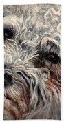 Bolognese Breed Beach Towel