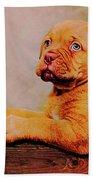 Bordeaux Mastiff Pup Beach Towel