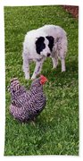 Border Collie Herding Chicken Beach Towel