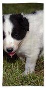 Border Collie Puppy Beach Towel
