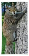 Boston Common Squirrel Hanging From A Tree Boston Ma Beach Towel