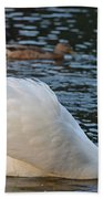 Boston Public Garden Swan Amongst The Ducks Ruffled Feathers Beach Towel