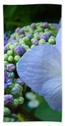 Botanical Garden Blue Hydrangea Flowers Baslee Troutman Beach Towel