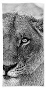 Botswana  Lioness In Black And White Beach Towel