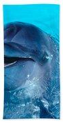 Bottlenose Dolphin Beach Towel