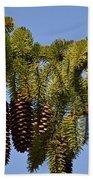 Boughs Of Pine Cones Beach Towel