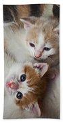 Box Full Of Kittens Beach Towel by Garry Gay