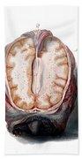 Brain, Anatomical Illustration, 1802 Beach Towel