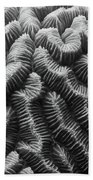 Brain Coral Details Beach Towel