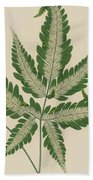 Brake Fern Beach Towel