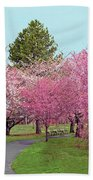 Branch Brook Cherry Blossoms II Beach Towel